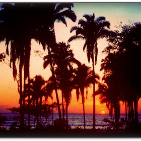 cocos playa